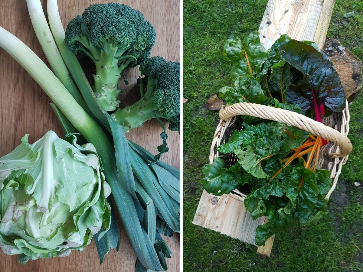 Blog d'Erika Fournel diététicienne - recettes de fânes antigaspi